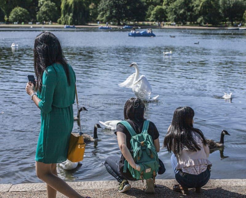 Hyde Park - mensen die de vogels voeden stock fotografie