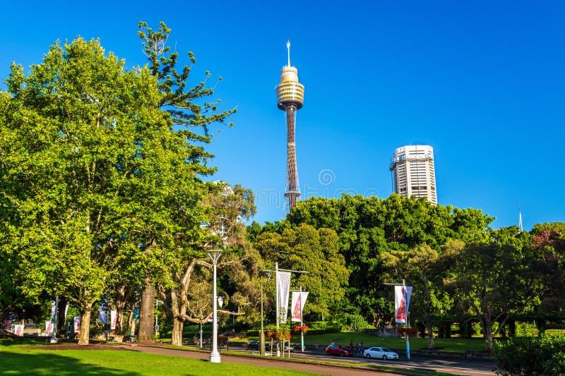 Hyde Park mit modernem Gebäude im Hintergrund in Sydney, Australien lizenzfreie stockfotografie