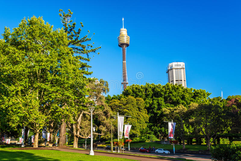 Hyde Park with modern building in the background in Sydney, Australia royalty free stock photography