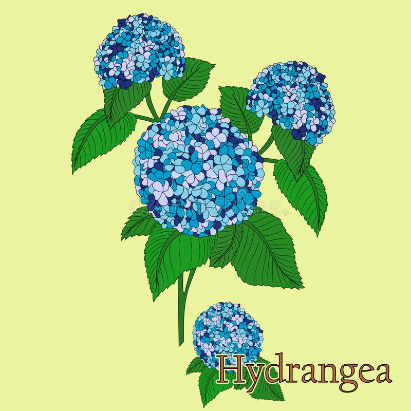 hydrangea Иллюстрация завода в векторе с цветками для пользы в украшать, создавая букеты иллюстрация вектора