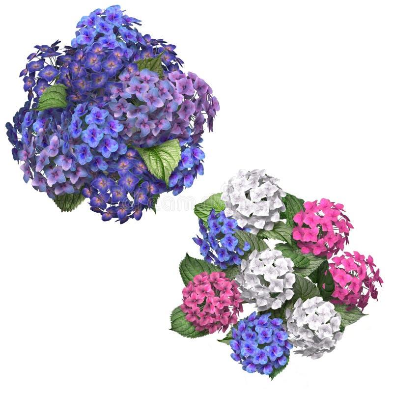 Hydrangea stock de ilustración