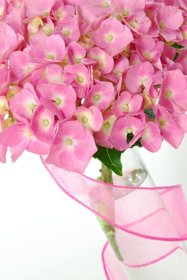 Hydrangea de Lacecap foto de stock