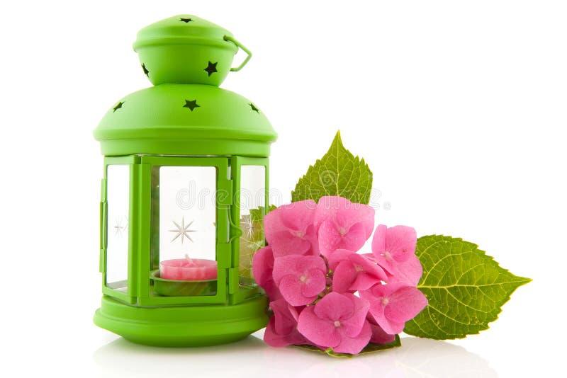 Hydrangea with green lantern stock photo