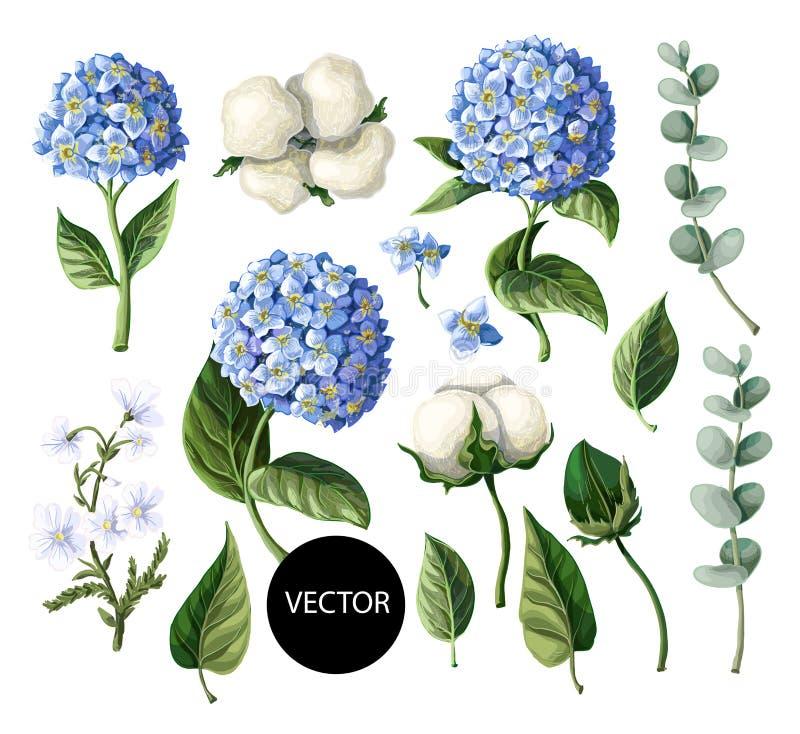 Hydrangea hortensia, katoenen die bloemen en eucalyptustak op witte achtergrond wordt geïsoleerd Vector illustratie stock illustratie