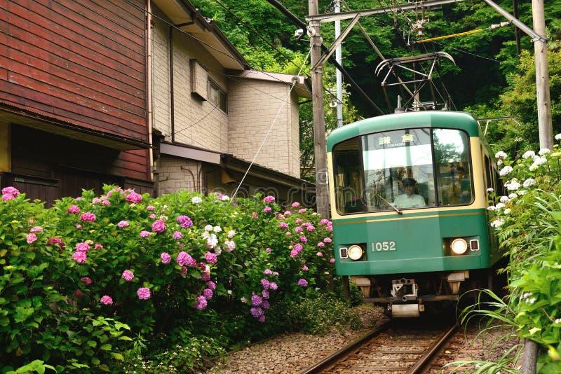 Hydrangea hortensia trainï ¼ Œin japanï ¼ Œkamakura stock afbeeldingen