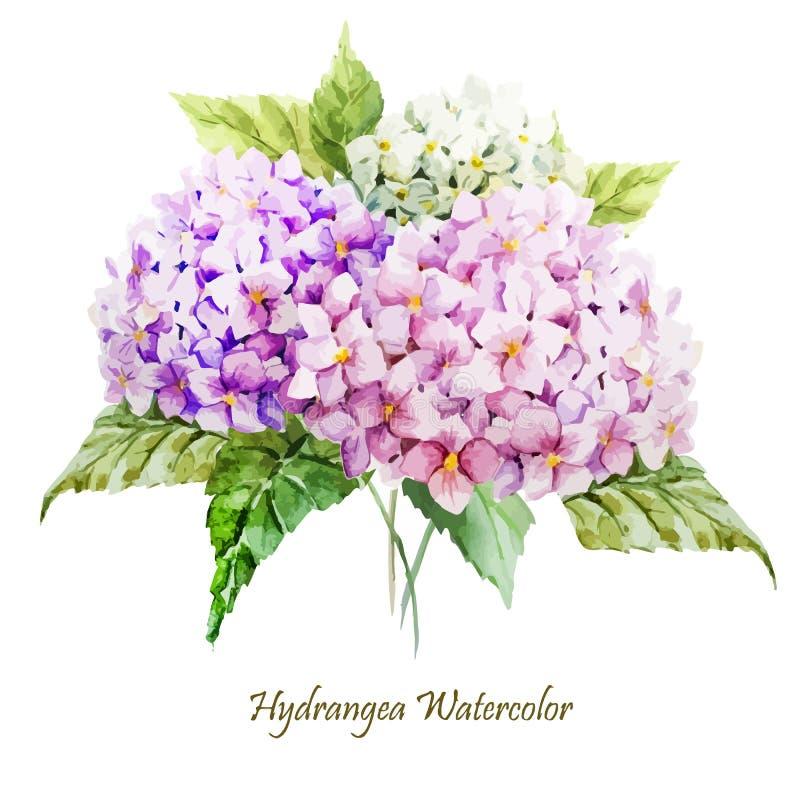 Hydrangea hortensiaboeket vector illustratie