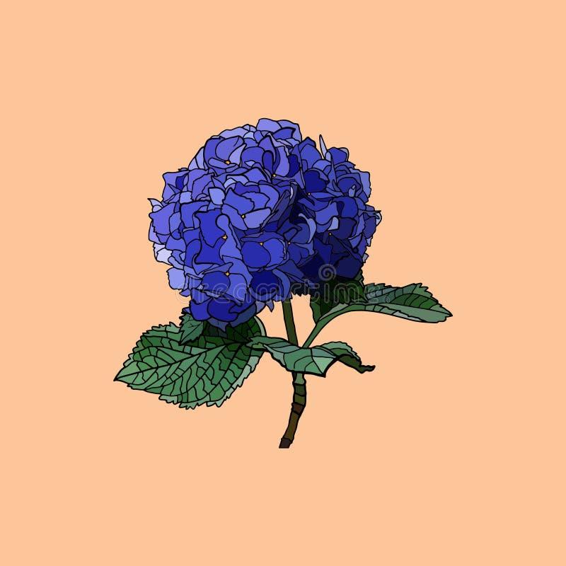 Hydrangea, illustration royalty free stock photo