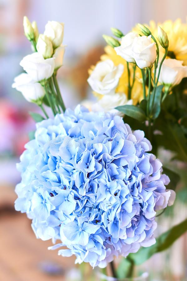 Hydrangea macrophylla or Hortensia flower with white roses and yellow astras. Close up photo. love, wonder concept royalty free stock photos