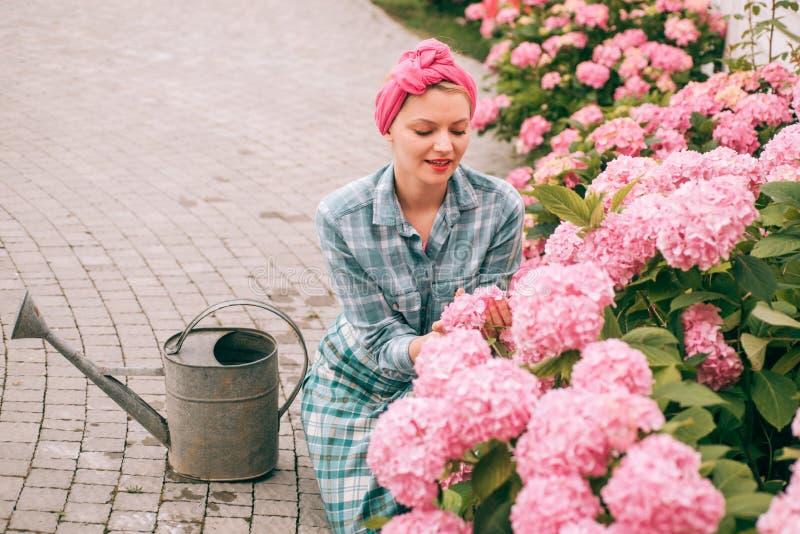 hydrangea Ressort et été jardinière heureuse de femme avec des fleurs Soin et arrosage de fleur sols et engrais Femme photos libres de droits