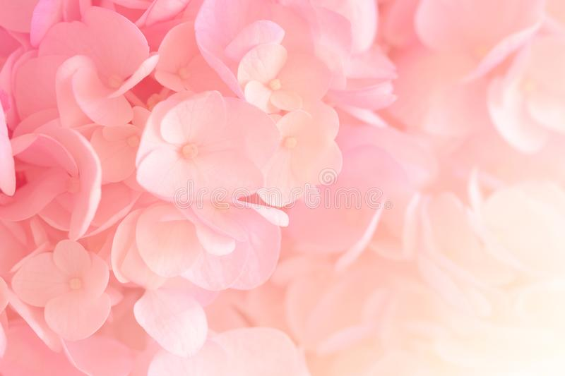 Hydrangea with soft pastel color in  blur style. Hydrangea with soft pastel color in  blur style for background stock photos