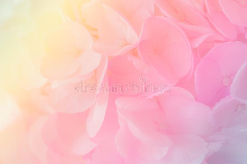 Hydrangea with soft pastel color in blur style . Hydrangea with soft pastel color in  blur style for background stock photo