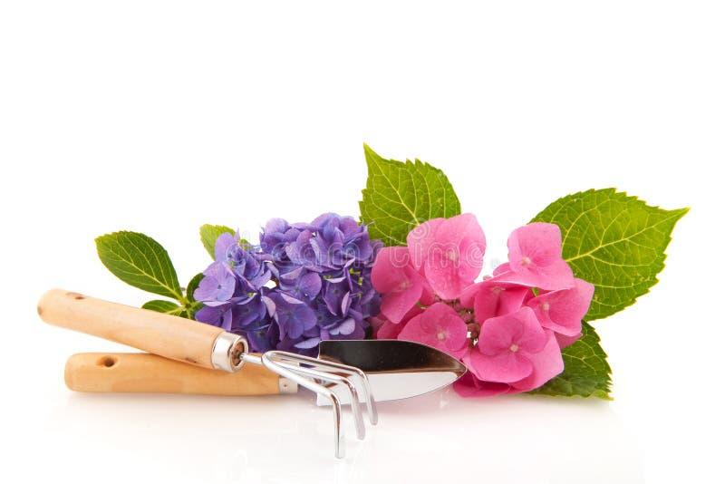 Hydrangea und Gartenarbeithilfsmittel lizenzfreies stockfoto