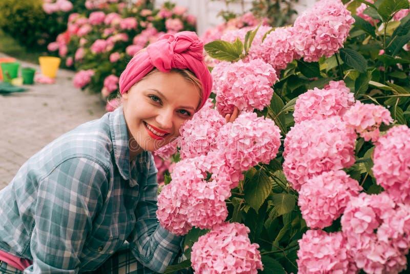 hydrangea Vår och sommar Omsorg och bevattna för blomma jorder och gödningsmedel Växthusblommor kvinnaomsorg av blommor arkivbild