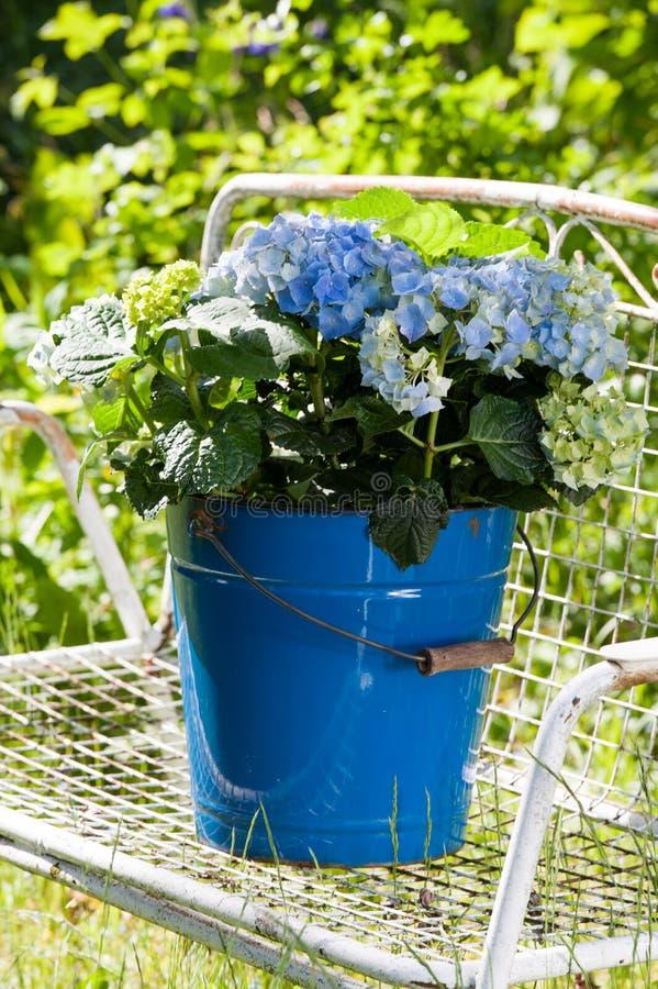 Download Hydrangeas стоковое фото. изображение насчитывающей hydrangeas - 41662294