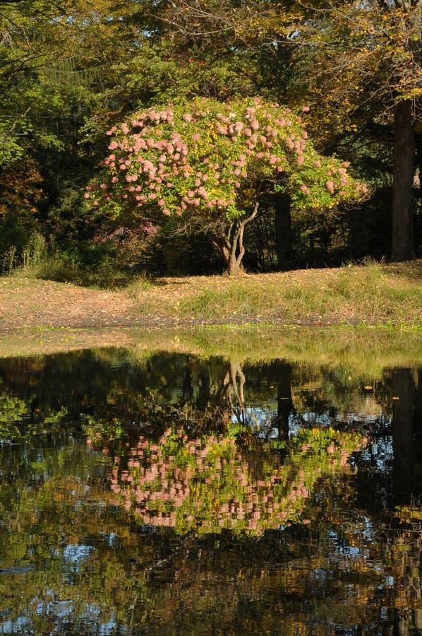 Hydrangeas in autunno fotografie stock