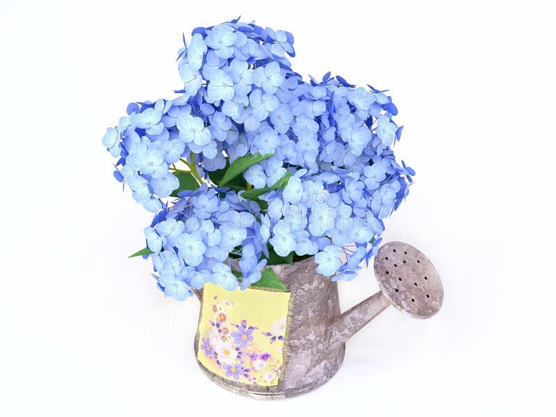 Hydrangeas azuis em um Watering-can ilustração do vetor