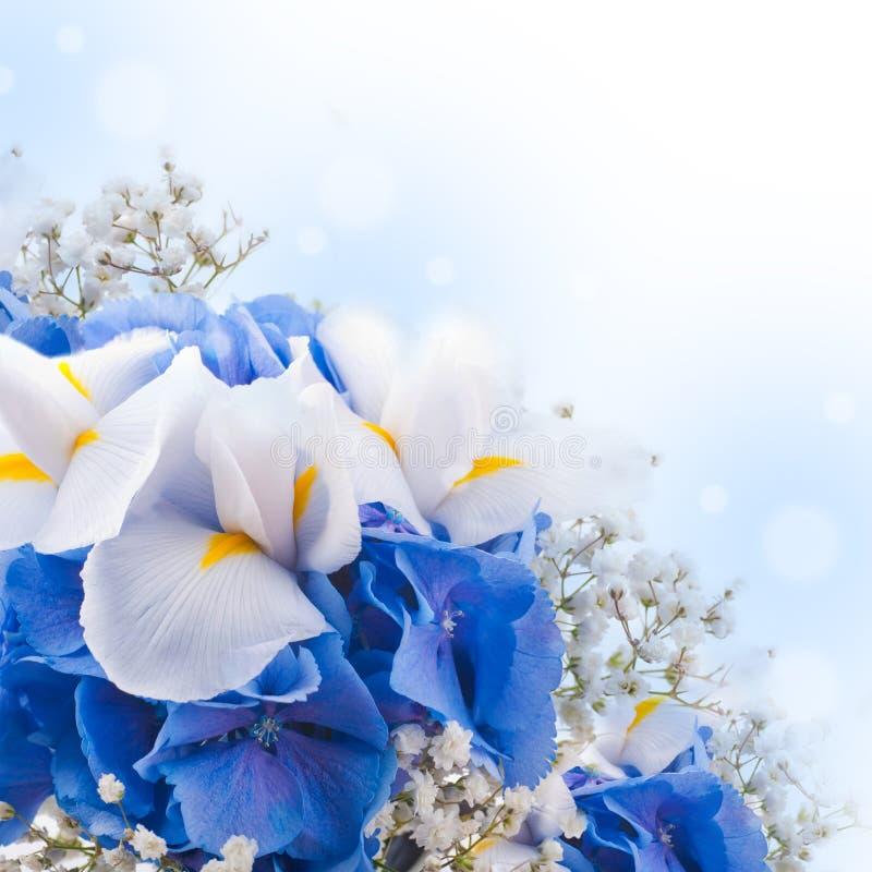 Hydrangeas blu ed iridi bianche fotografia stock