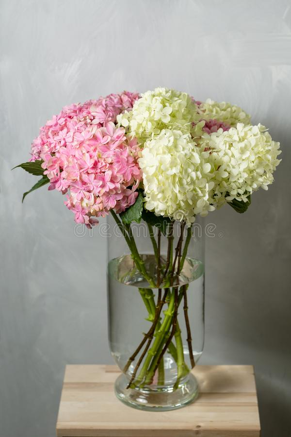 Free Hydrangeas In A Glass Vase. Hydrangeas Produce Larger Mop Heads Made Up Of Clusters Of Small Flowers From Summer Through Stock Photos - 101994593
