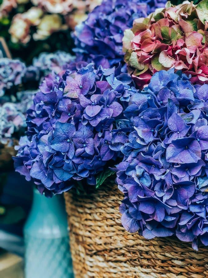 Hydrangebloemen op de Franse markt royalty-vrije stock afbeeldingen