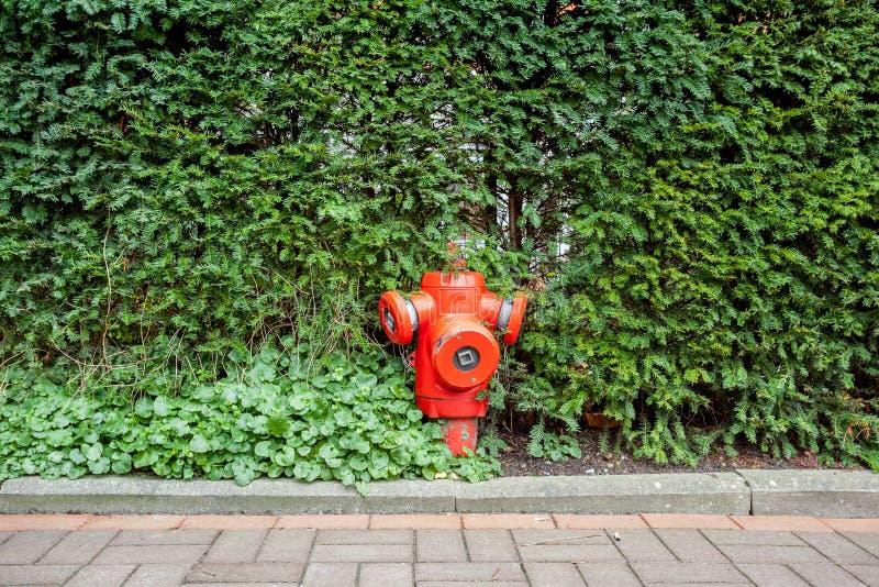 Hydrant in den Büschen stockfoto