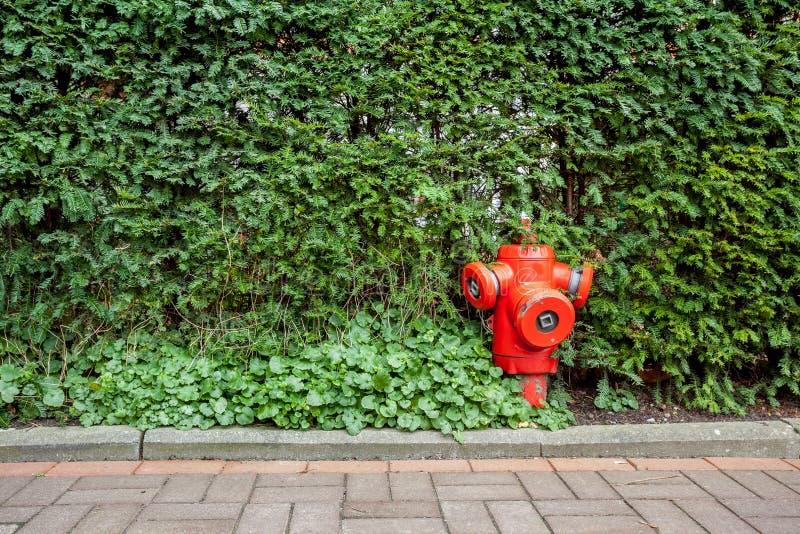 Hydrant in den Büschen stockfotos