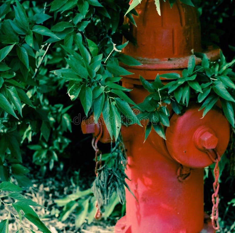 Hydrant in einem Busch lizenzfreie stockfotos