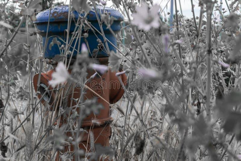 Hydrant im Gras lizenzfreie stockfotografie