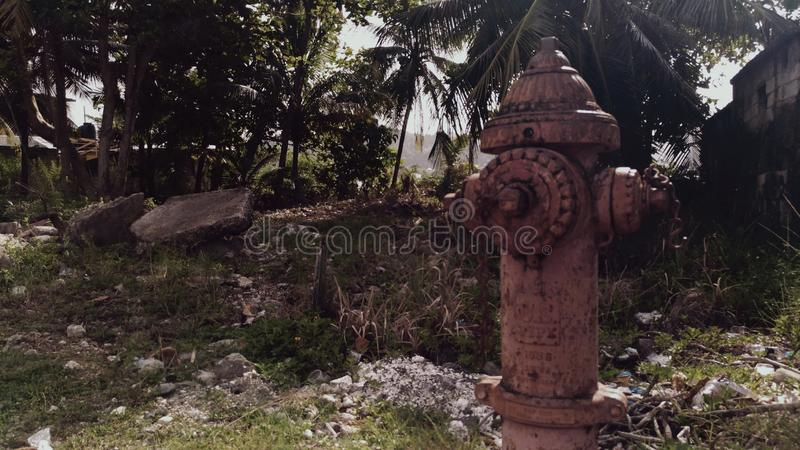 Hydrant. Inactive hydrant in the middle of florest stock images