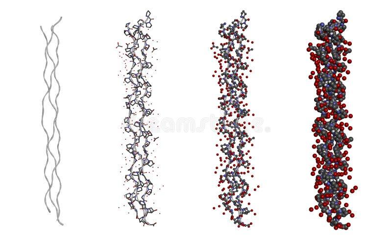 Hydratiestructuur van een drievoudige peptide van het schroefcollageen molecule in verschillende modellen op witte achtergrond royalty-vrije illustratie