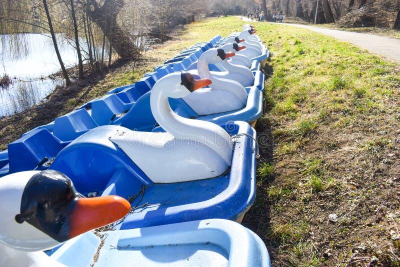Hydrobikes o bicis del agua con forma del pato cerca de los turistas que esperan del lago del parque por diversi?n imagenes de archivo