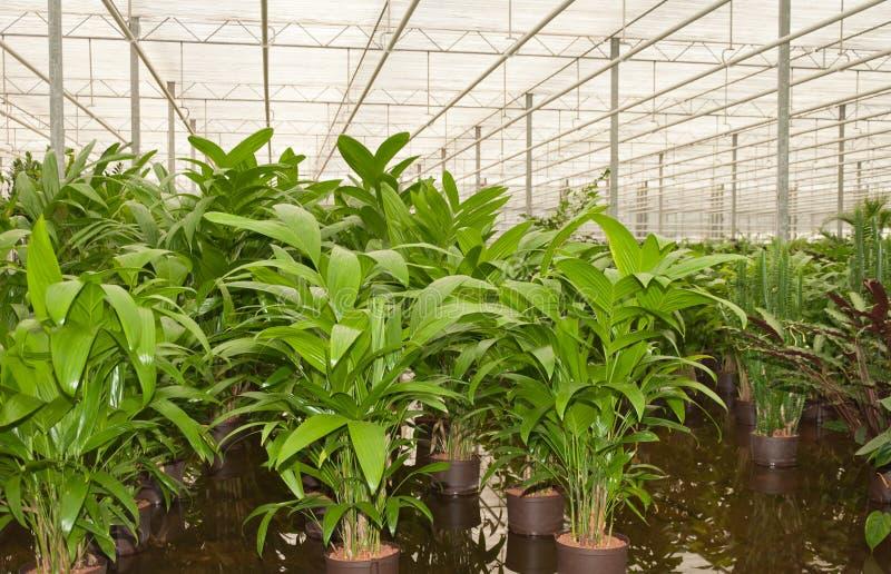 hydroculture苗圃植物 免版税库存图片