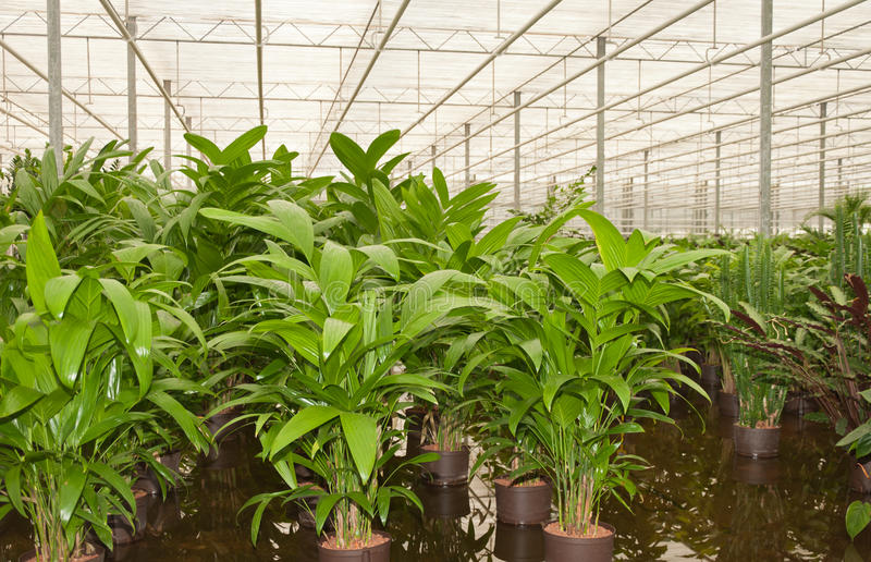 Hydroculture plant nursery royalty free stock image
