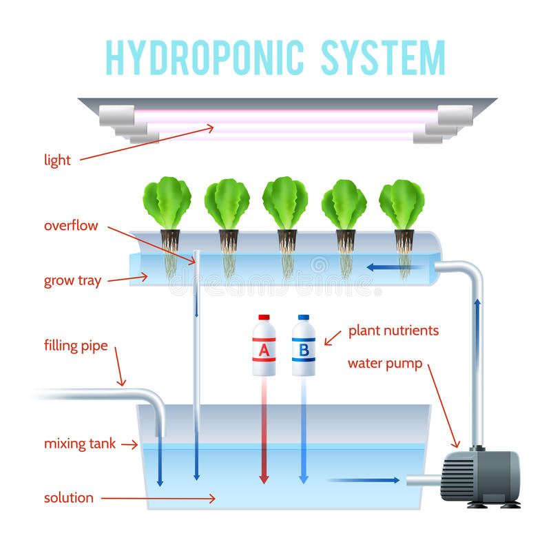 Hydrocultuur Gekleurde Infographic royalty-vrije illustratie