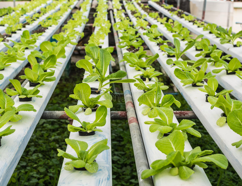 Hydrocultuurmethode van groen cos. stock foto
