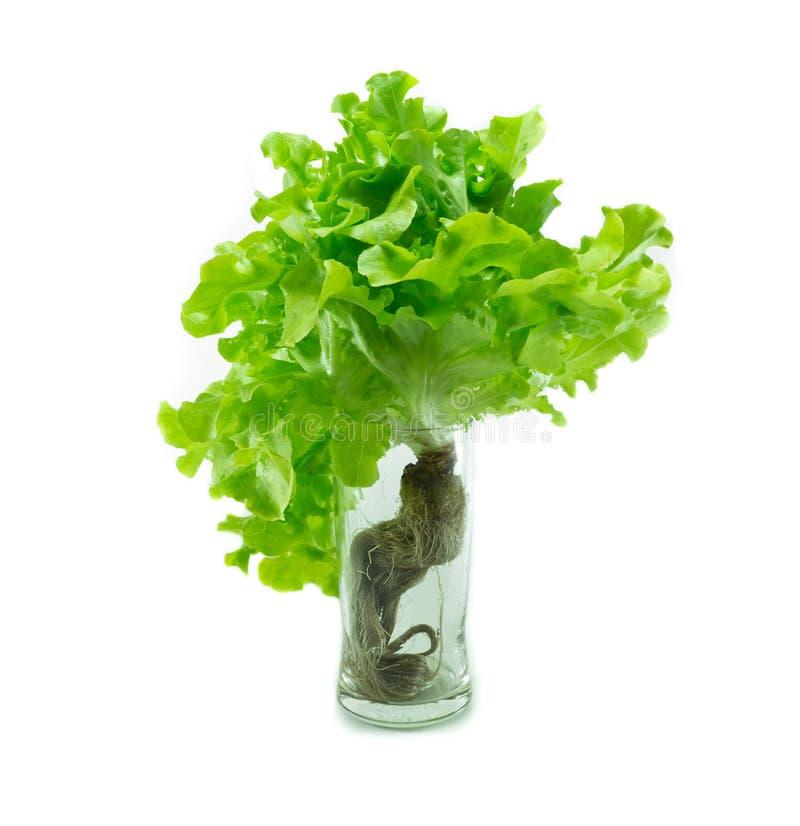 Download Hydroponic овощ стоковое изображение. изображение насчитывающей стекло - 37931621
