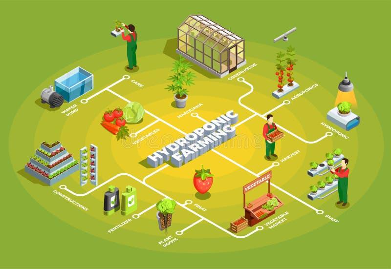 Hydroponic de Landbouw Isometrisch Stroomschema royalty-vrije illustratie