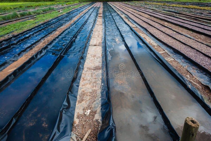 Hydroponic Farming Preparation royalty free stock photos