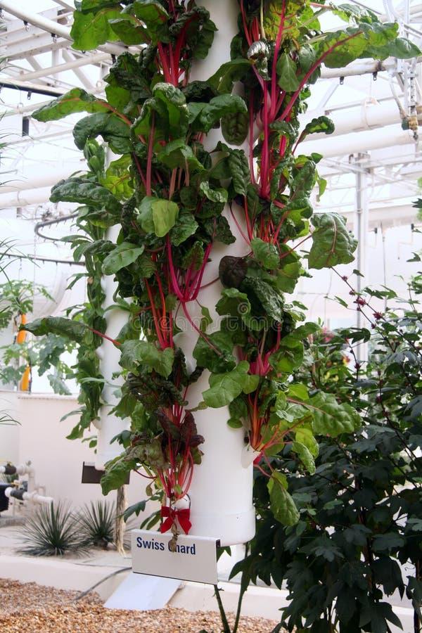 hydroponic grönsak royaltyfri bild