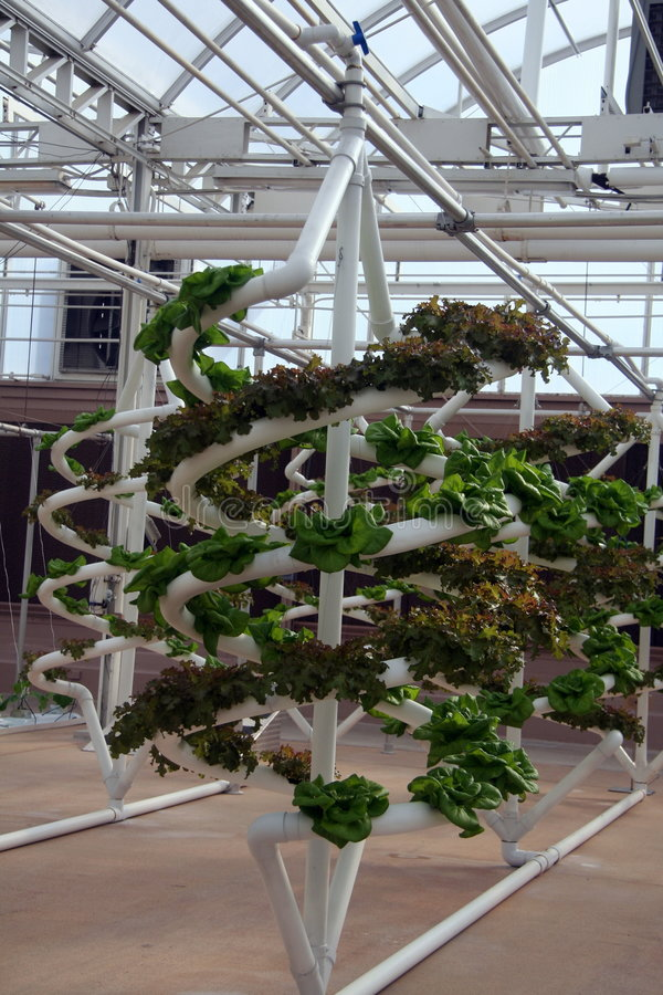 hydroponic grönsaker arkivbild