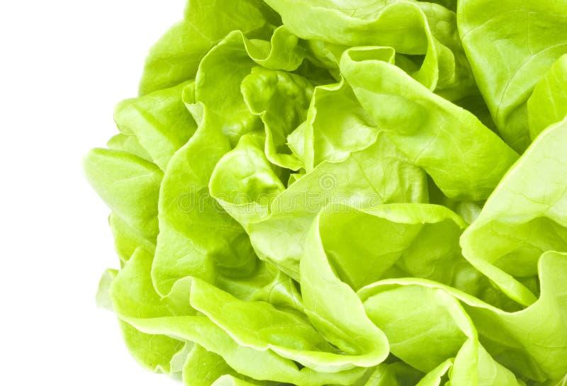 hydroponic grönsallat arkivbild