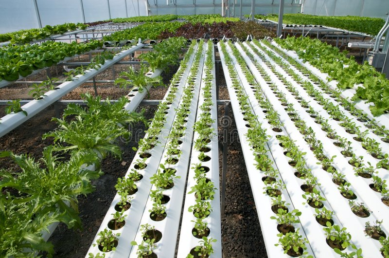 Hydroponic Greenhouse royalty free stock photo