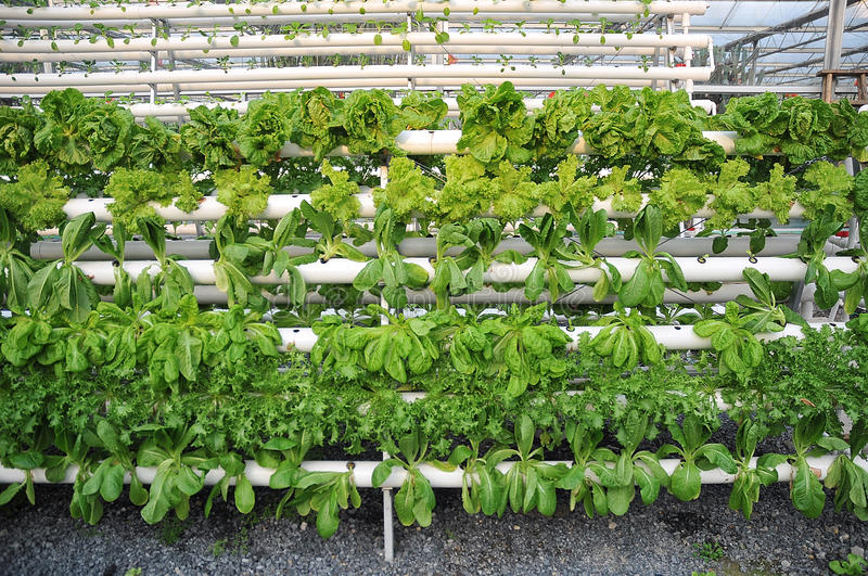Hydroponic greenhouse plants