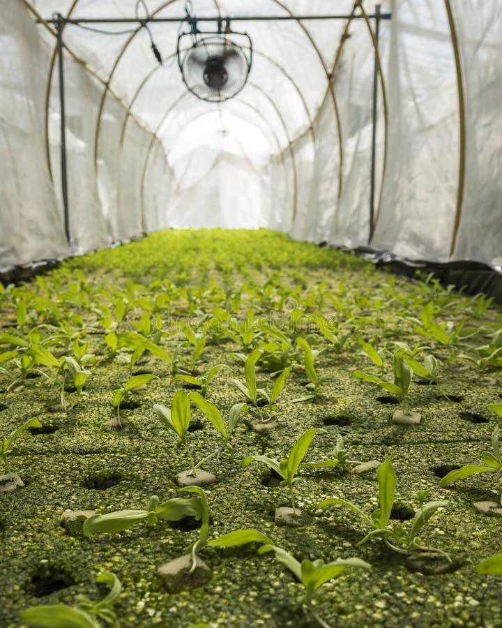 Hydroponic jordbruksmark arkivfoton