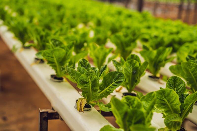 Hydroponic landbouwbedrijf van de groentensalade Hydrocultuurmethode om te groeien royalty-vrije stock afbeelding