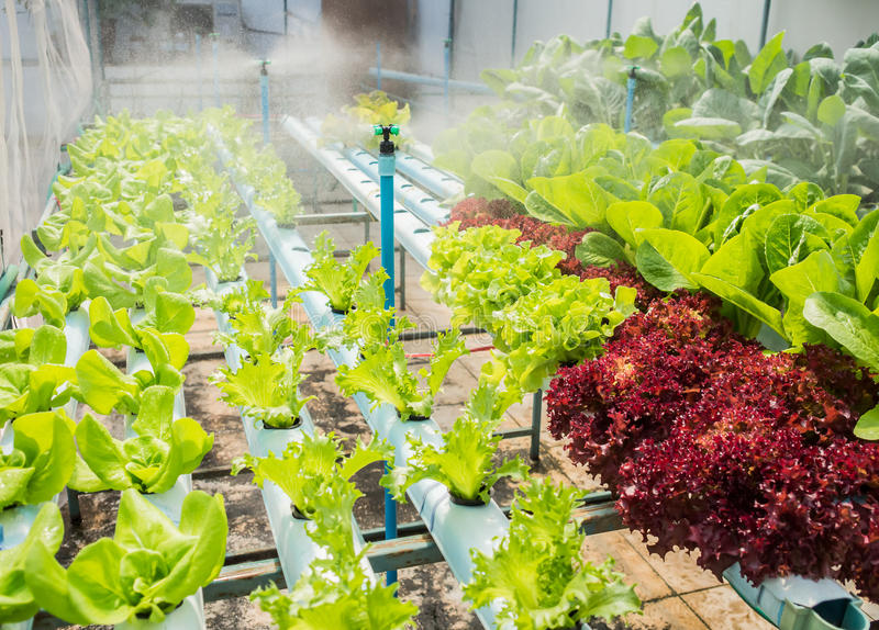 Hydroponic plants royalty free stock photography