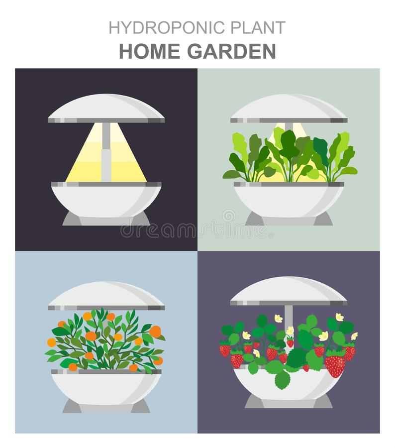 Hydroponic system for growing different plants, strawberries, lettuce, oranges without soil, home garden installation. Vector illustration-Hydroponic system for stock illustration