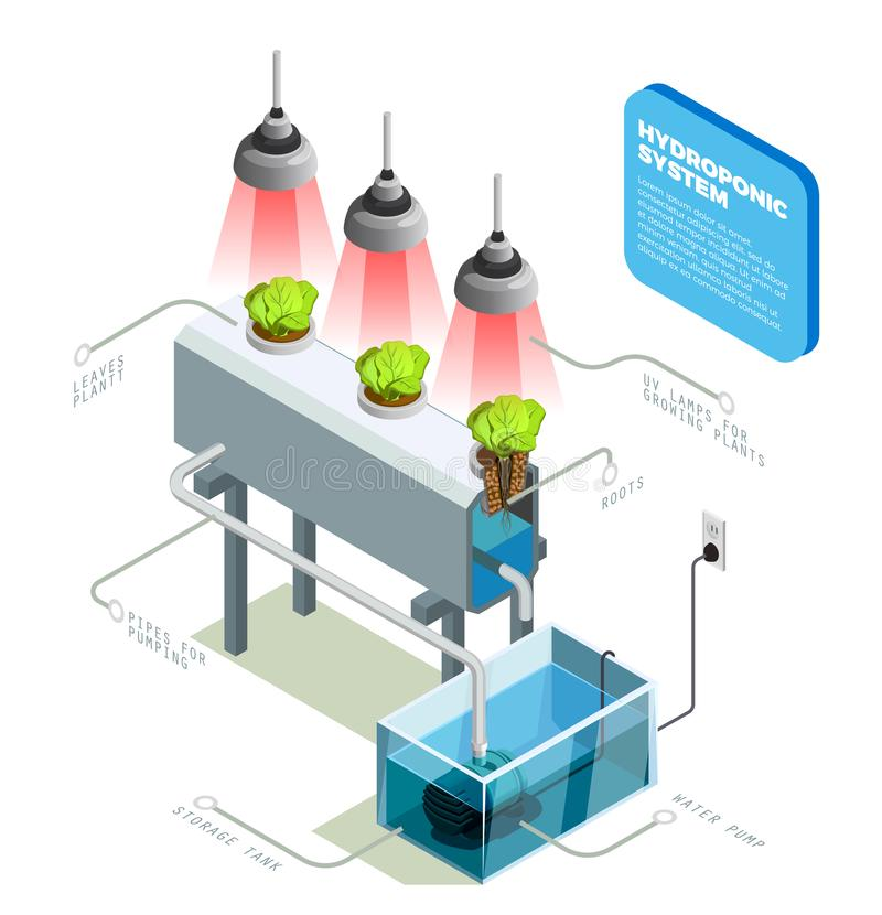 Hydroponic systemu Infographic układ ilustracji