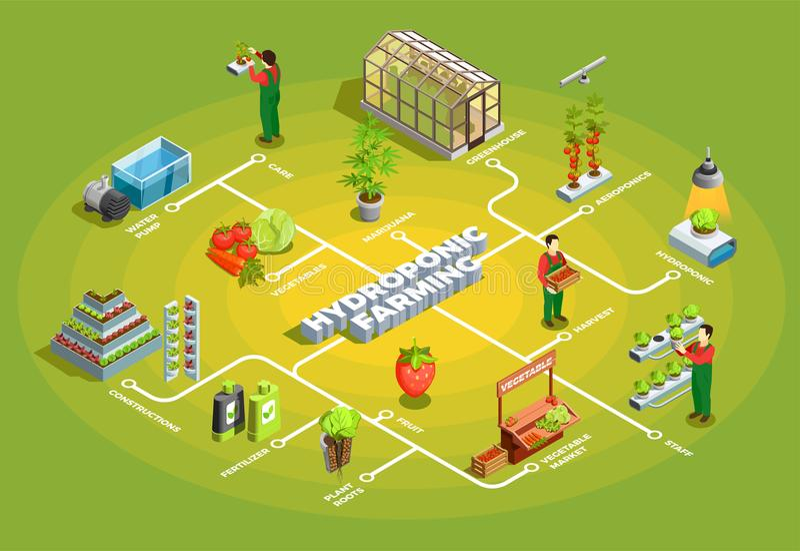 Hydroponic Uprawia ziemię Isometric Flowchart royalty ilustracja