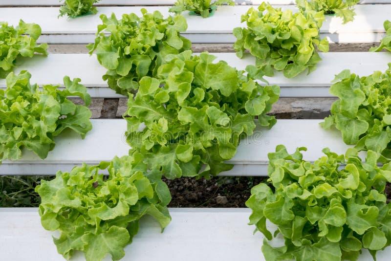 Hydroponic växa för grönsaker i växthus royaltyfri foto