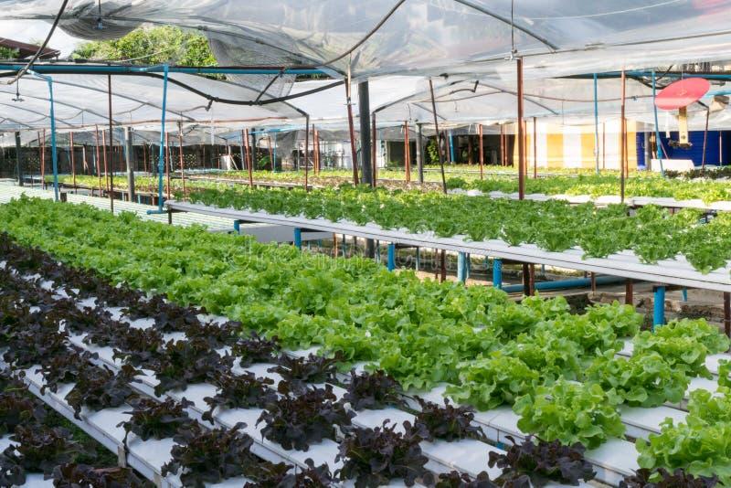 Hydroponic växa för grönsaker i växthus arkivfoto